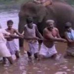 Aathukulla Aira Meenu Song Lyrics