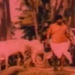 Sittu Kuruvi Paaru